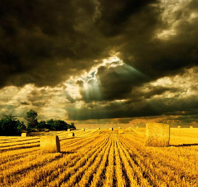 Желтый цвет в фотографии 16