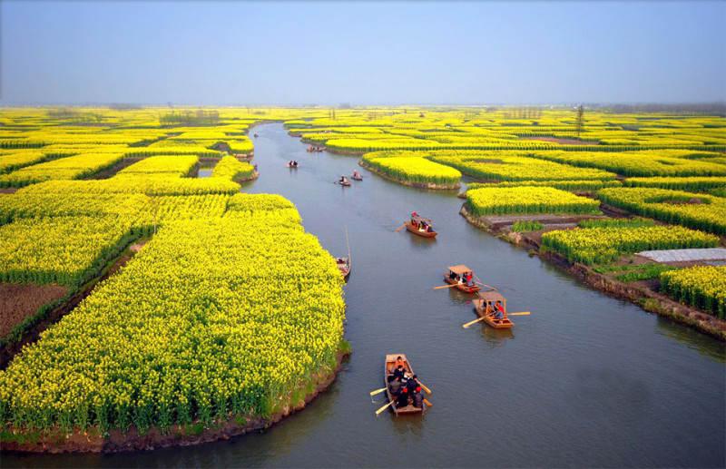 Желтый цвет в фотографии 2