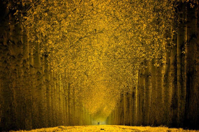 Желтый цвет в фотографии 7
