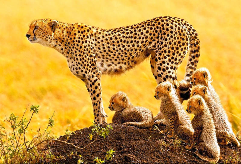 Фото: Stephen Oachs | National Geographic