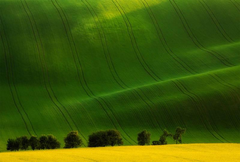 Зеленый цвет в фотографии 11