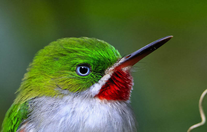 Зеленый цвет в фотографии 13