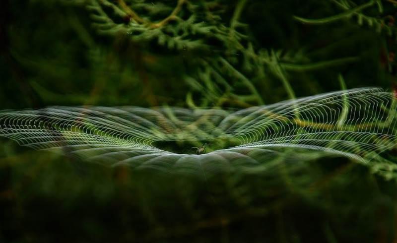Зеленый цвет в фотографии 19