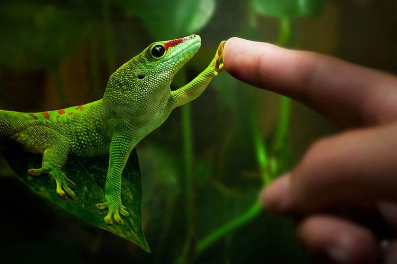 Зеленый цвет в фотографии 3