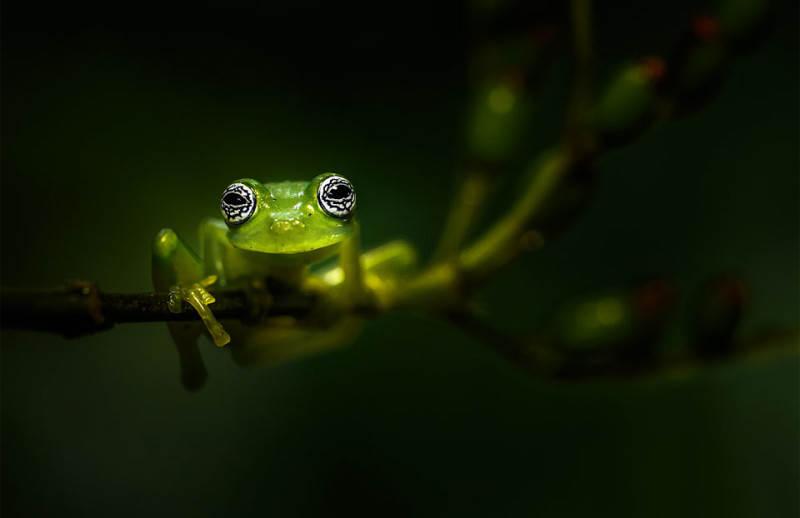Зеленый цвет в фотографии 4