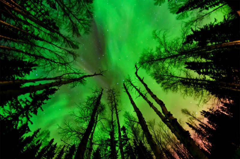 Зеленый цвет в фотографии 5
