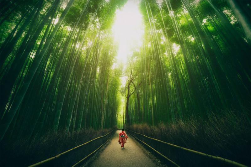 Зеленый цвет в фотографии 6
