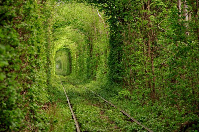 Зеленый цвет в фотографии 8