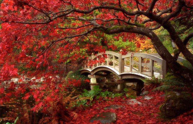 красный цвет в фотографии 1