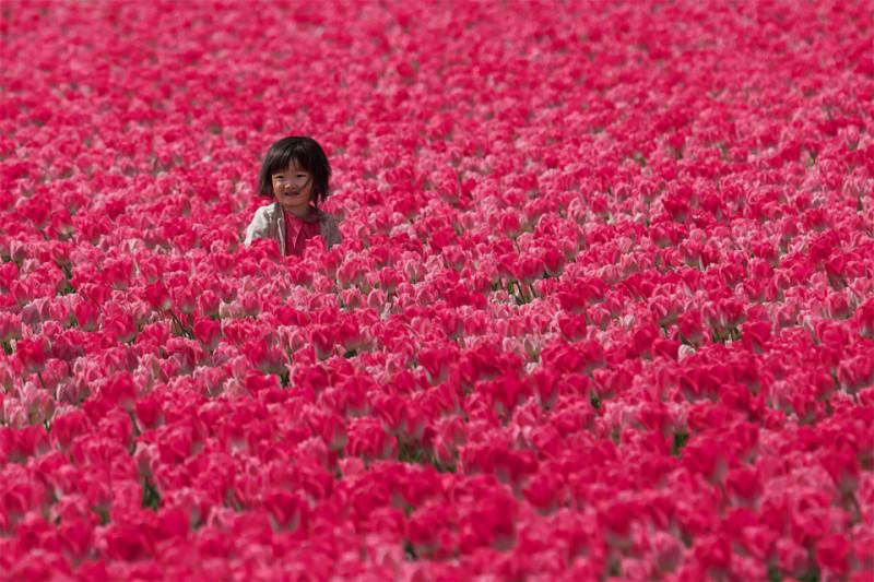 красный цвет в фотографии  10