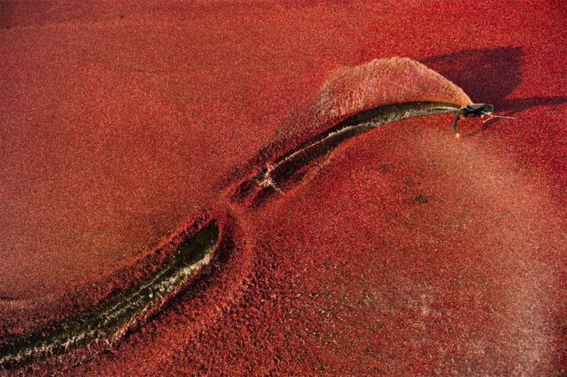 красный цвет в фотографии  11
