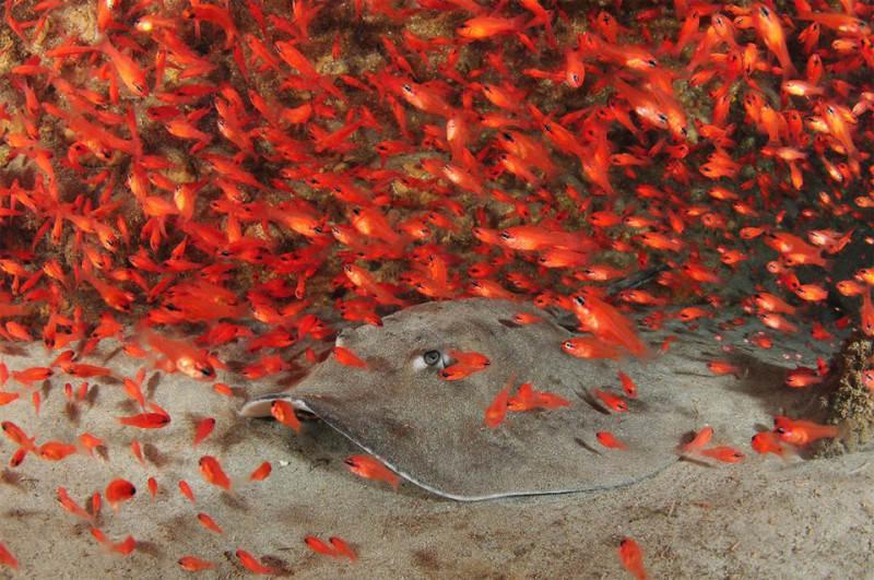 красный цвет в фотографии  12