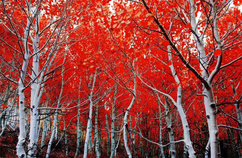 красный цвет в фотографии  16