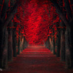 Красный цвет в фотографии