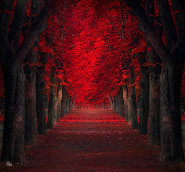 красный цвет в фотографии 2