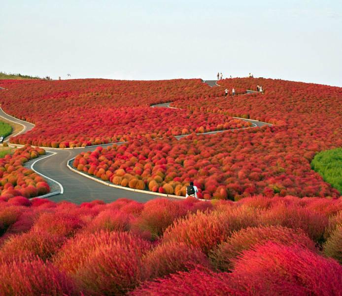 красный цвет в фотографии 3