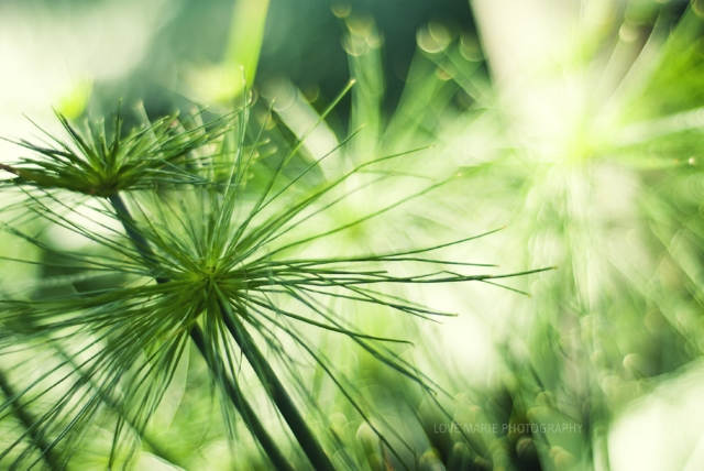 Фотоконкурс в зеленых тонах Focussion
