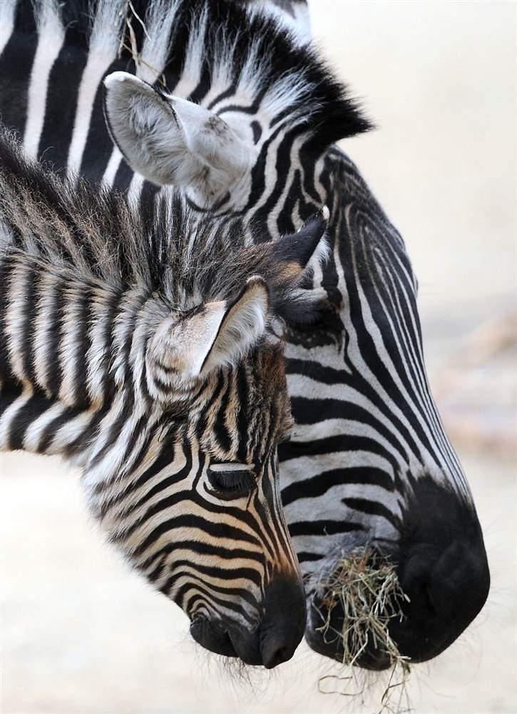 Детеныши животных 6