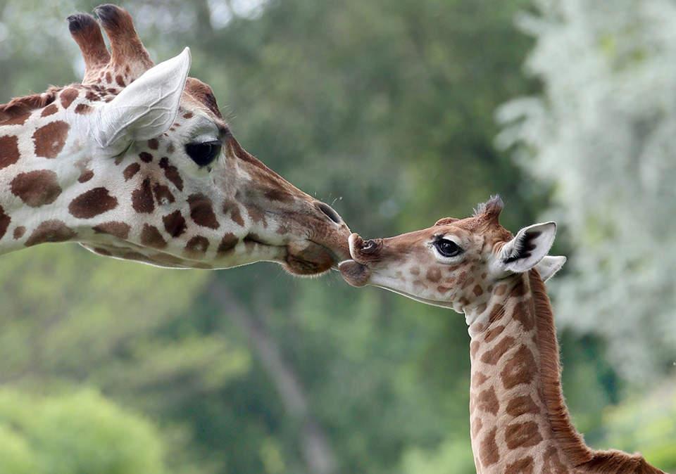 Детеныши животных