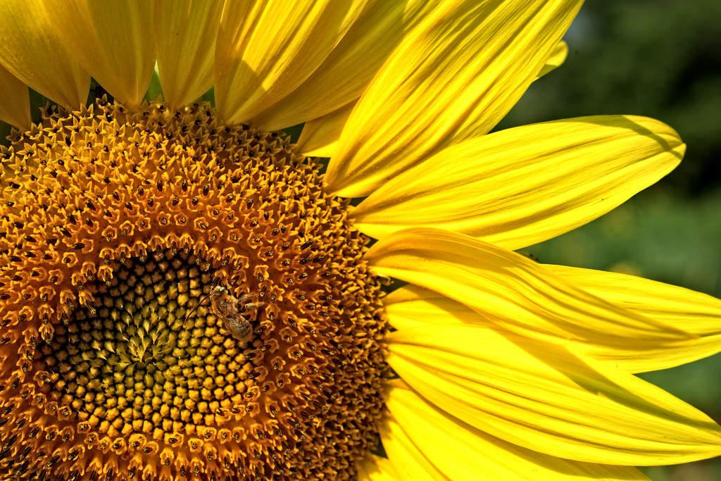 Примеры фотографий, сделанных с Nikon D810 12
