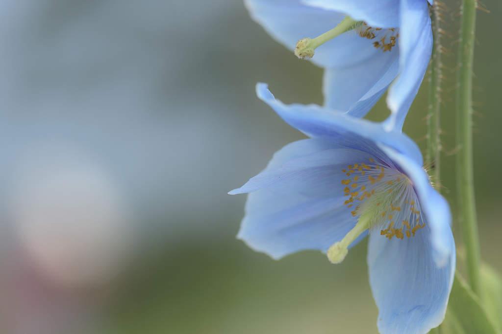 Примеры фотографий, сделанных с Nikon D810 49
