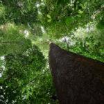 Примеры фотографий, сделанных с Nikon D810