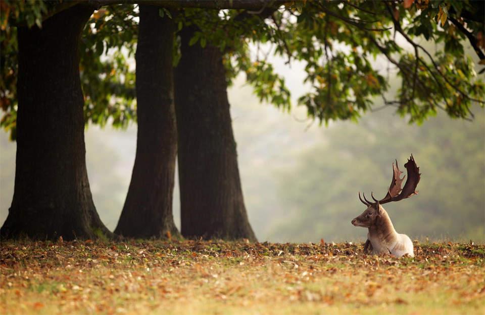 Съемка дикой природы. Рекомендации 6