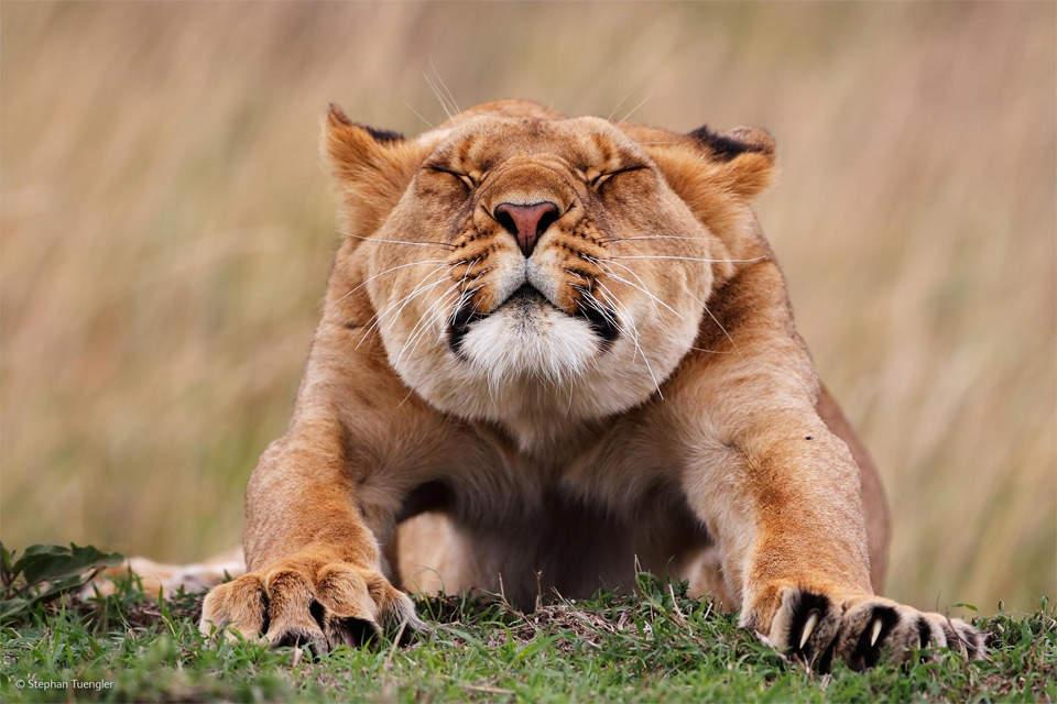 Съемка дикой природы. Рекомендации