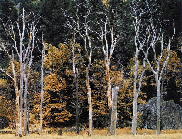Великий пейзажист Ансел Адамс (Ansel Adams) 7
