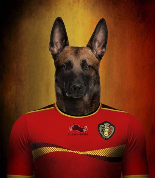 Бельгия - Бельгийская овчарка