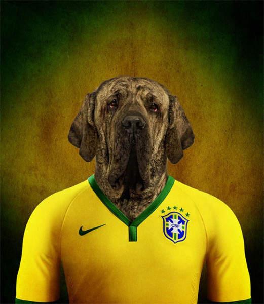 Бразилия - Бразильский мастиф