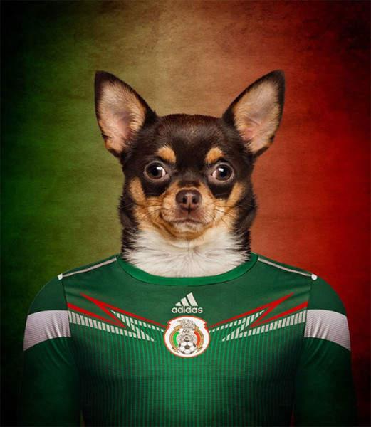 Собаки разных стран в майках команд ЧМ 2014