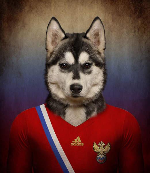 vb-2014-csapatok-kutyak-orosz-sziberiai-husky