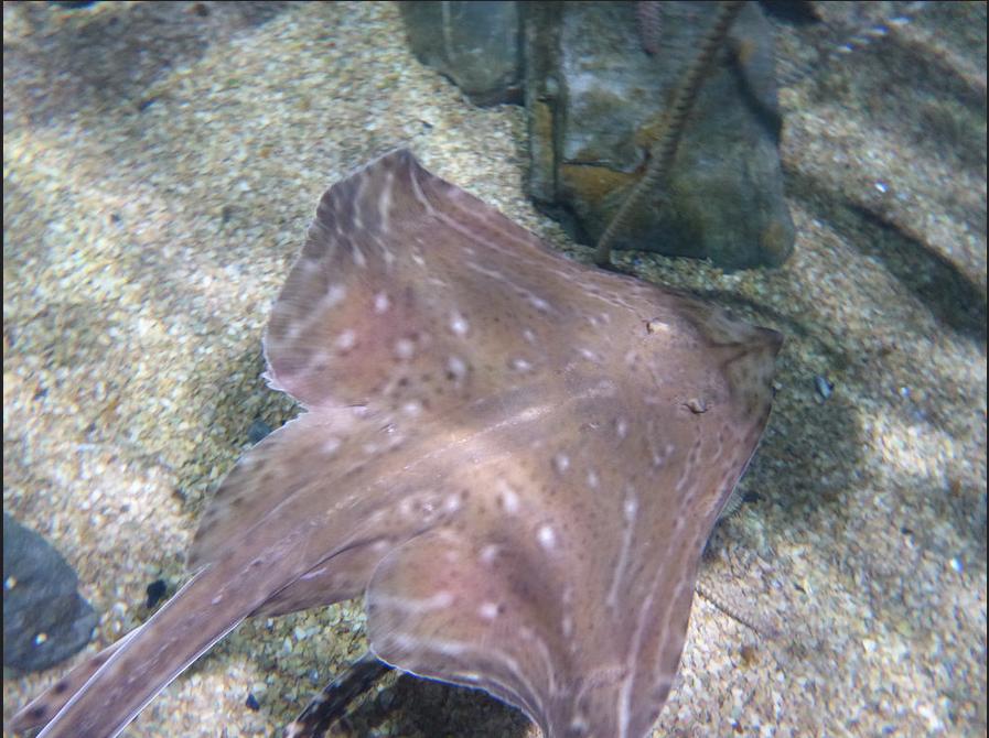 Пример фото, сделанного с помощью Panasonic Lumix TS5