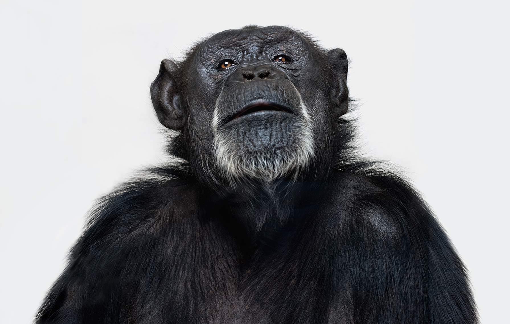 Портреты животных Vincent J Musi 2