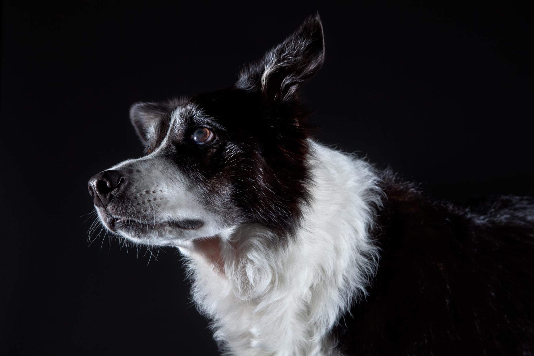Портреты животных собака