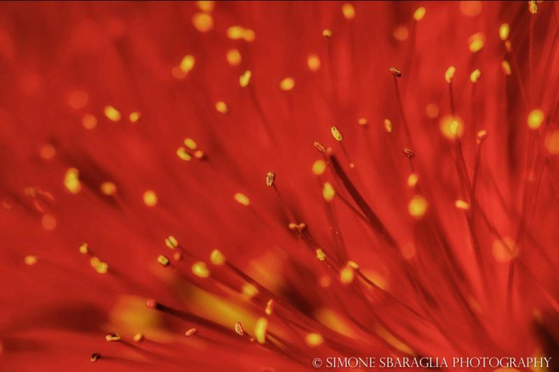 Природа глазами Simone Sbaraglia цветок макро