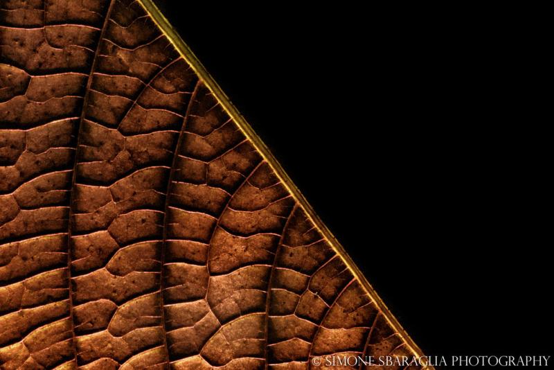 Природа глазами Simone Sbaraglia лист макро