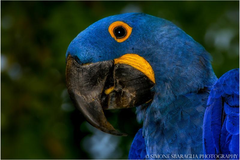 Природа глазами Simone Sbaraglia попугай