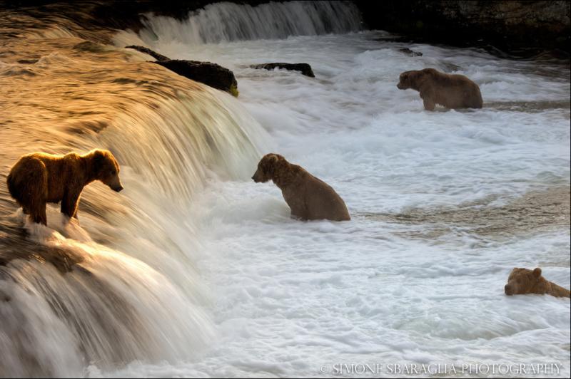 Природа глазами Simone Sbaraglia медведь
