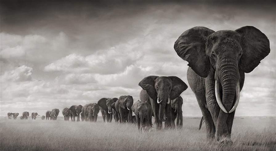 Самые богатые фотографы в мире. Ник Брандт (Nick Brandt)