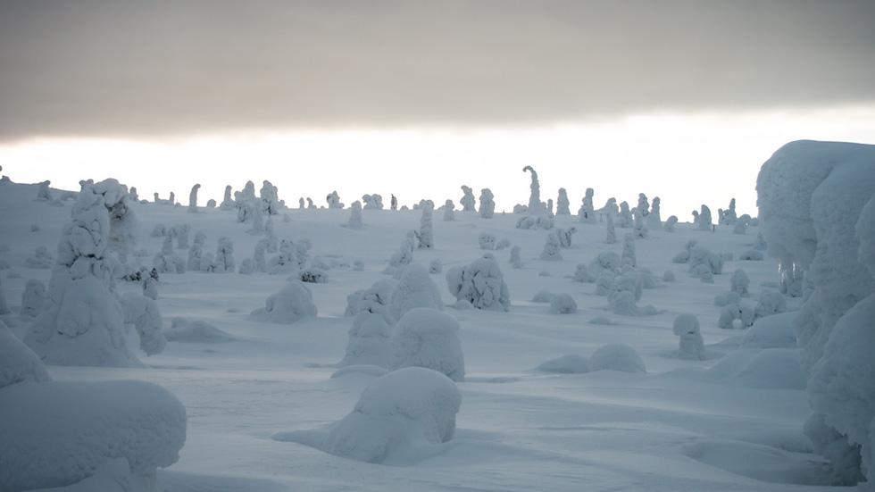 Снежные фигу в Финляндии Самые красивые места планеты 14