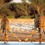 Советы по фотосъемке дикой природы