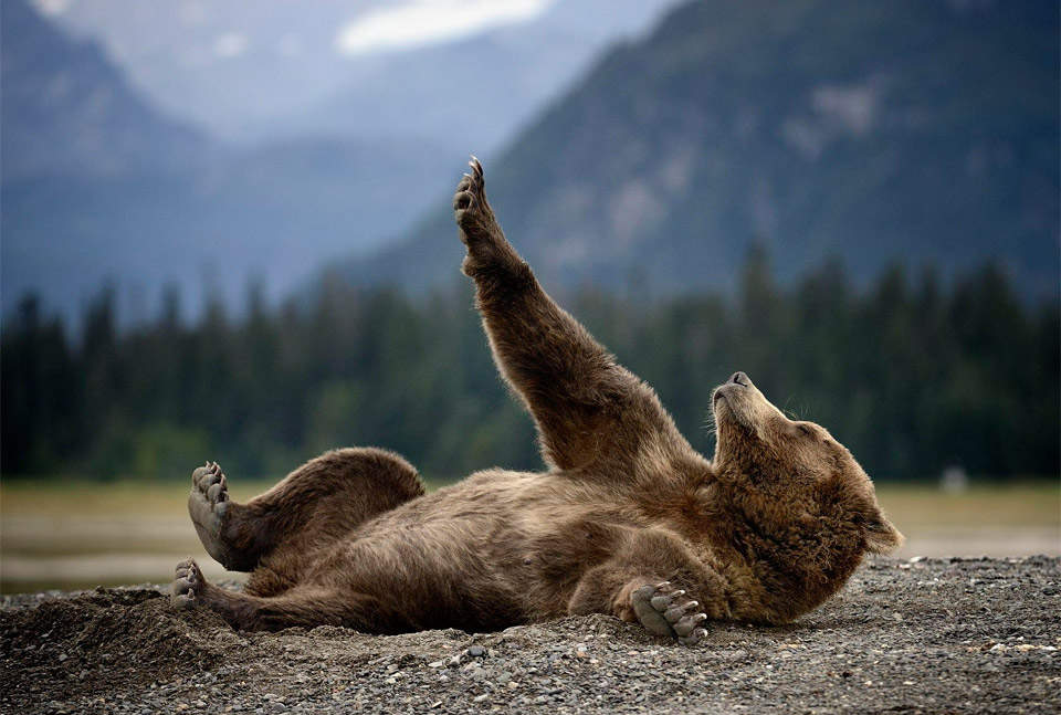 Советы по фотосъемке дикой природы 2