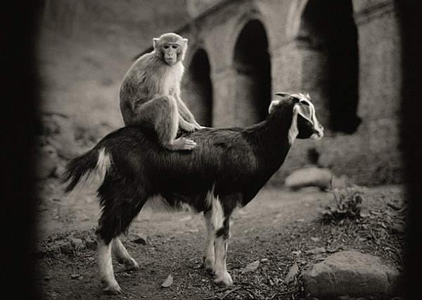 Потрясающие черно-белые фотографии Pentti Sammallahti