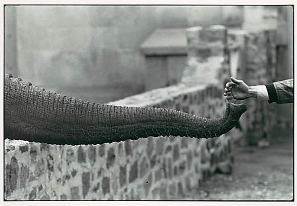Потрясающие черно-белые фотографии Garry Winogrand