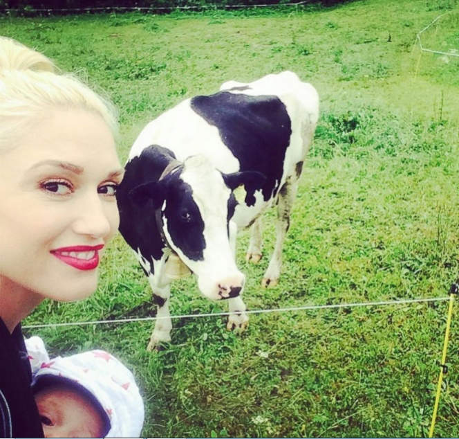 selfie Gwen Stefani селфи гвен стефани