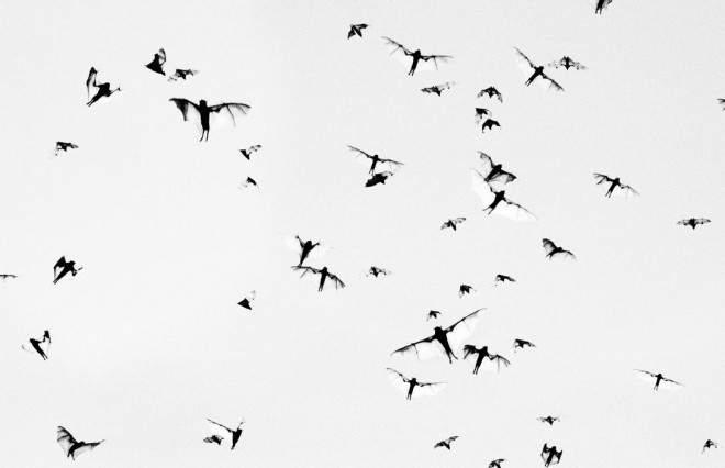12 уроков Уличной фотографии Трент Парк (Trent Parke)