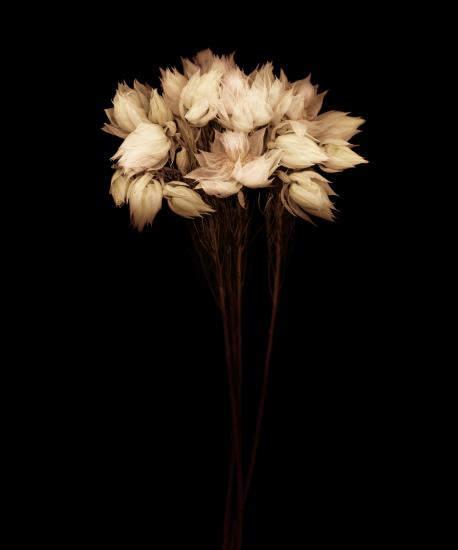 Цветочные портреты в проекте Джойс Теннесон (Joyce Tenneson) 15