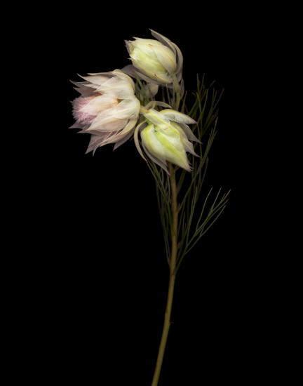 Цветочные портреты в проекте Джойс Теннесон (Joyce Tenneson) 20